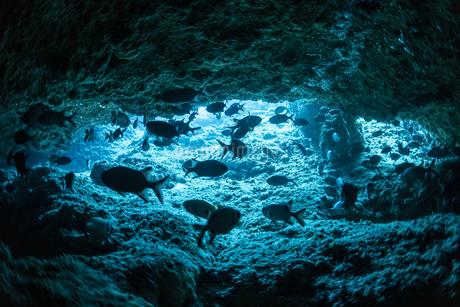 水中洞窟の写真素材 [FYI04304734]