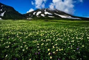旭岳のチングルマ群生地帯の写真素材 [FYI04304856]