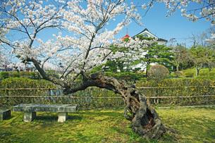 桜の写真素材 [FYI04305162]