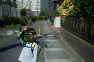 葉で顔を隠す少年の写真素材 [FYI04305184]