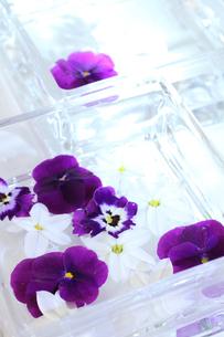 紫色のパンジー・ビオラと白い花を浮かべたガラスの器に光が射しこんで(生花)の写真素材 [FYI04305369]