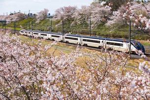 満開の桜並木と京成成田空港線スカイライナー 上り線白井駅~西白井駅の写真素材 [FYI04305603]