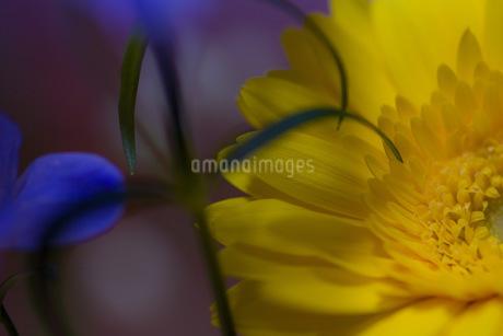 春の花の写真素材 [FYI04305620]