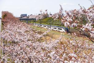 満開の桜並木と京成成田空港線スカイライナー 白井駅~西白井駅の写真素材 [FYI04306071]