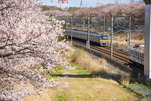 満開の桜と北総鉄道上り下り車両 白井駅~小室駅の写真素材 [FYI04306226]