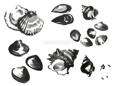 貝のイラスト素材 [FYI04306255]