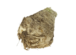 白背景の根セロリ(セルリアック)の写真素材 [FYI04306262]