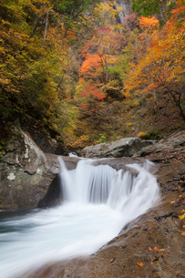 紅葉の西沢渓谷の写真素材 [FYI04306323]