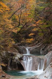紅葉の西沢渓谷の写真素材 [FYI04306325]