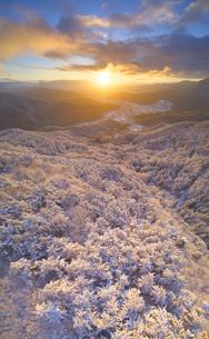 十観山の霧氷の樹林と朝日と浅間山遠望の写真素材 [FYI04306701]
