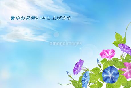 暑中お見舞い 朝顔のイラスト素材 [FYI04306855]