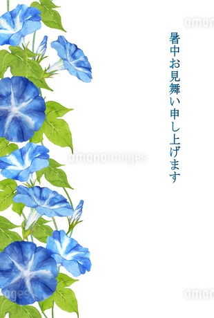 暑中お見舞い 朝顔のイラスト素材 [FYI04306856]