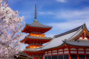清水寺の三重塔と桜の写真素材 [FYI04306878]