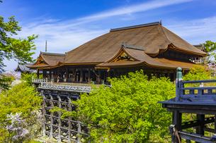 新緑の春の清水寺の写真素材 [FYI04306883]