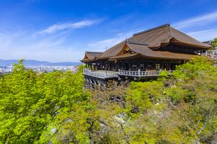 新緑の春の清水寺の写真素材 [FYI04306884]