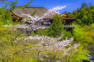 桜咲く春の清水寺の写真素材 [FYI04306886]