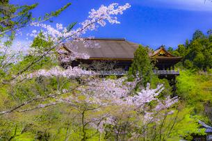 桜咲く春の清水寺の写真素材 [FYI04306887]