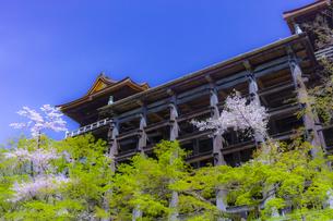 桜咲く春の清水寺の写真素材 [FYI04306888]