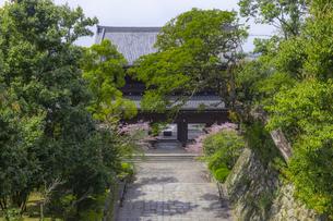 春の知恩院・三門の写真素材 [FYI04306898]
