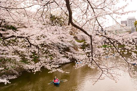 千鳥ヶ淵の桜の写真素材 [FYI04306902]