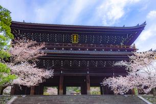 春の知恩院・三門の写真素材 [FYI04306906]