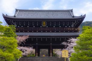 春の知恩院・三門の写真素材 [FYI04306909]