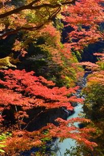 大血川渓谷の紅葉  金蔵落しの渓流 の写真素材 [FYI04306924]