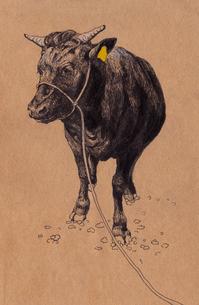 たんち牛のイラスト素材 [FYI04306936]
