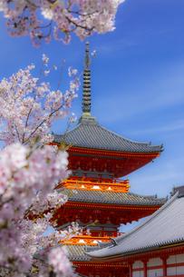 清水寺の三重塔と桜の写真素材 [FYI04306938]