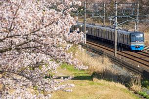 満開の桜と北総鉄道上り普通列車の写真素材 [FYI04306969]