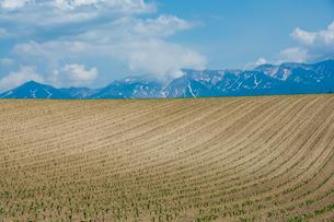 植え付けが終わった畑と残雪の山並みの写真素材 [FYI04307047]