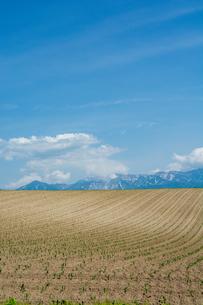 植え付けが終わった畑と残雪の山並みの写真素材 [FYI04307048]