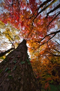 秋に包まれての写真素材 [FYI04307101]