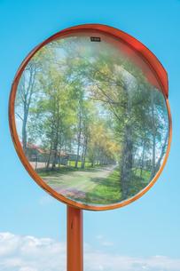 鏡越しの並木道の写真素材 [FYI04307140]