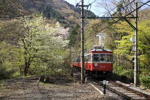 箱根小涌谷付近を走る箱根登山鉄道の写真素材 [FYI04307262]