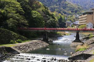 新緑の箱根湯本 早川と背景に箱根の旅館ホテル群の写真素材 [FYI04307267]