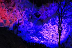 芦ヶ久保の氷柱 ライトップされた埼玉県横瀬町冬のイベントの写真素材 [FYI04307272]