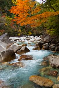 紅葉と青い水をたたえる長野県の阿寺渓谷の写真素材 [FYI04307342]