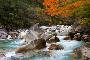 紅葉と青い水をたたえる長野県の阿寺渓谷の写真素材 [FYI04307343]