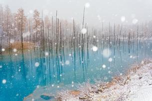青い池の写真素材 [FYI04307426]