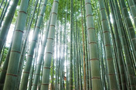 竹林の写真素材 [FYI04307429]