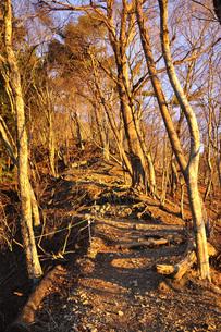 朝陽の登山道の写真素材 [FYI04307441]