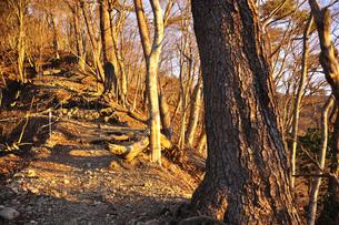 朝陽の登山道の写真素材 [FYI04307443]