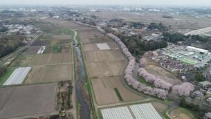 桜回廊の写真素材 [FYI04307632]