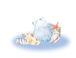 貝殻水彩画のイラスト素材 [FYI04307795]