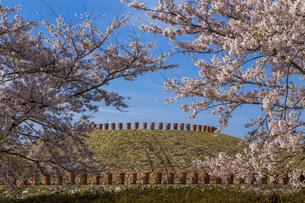 あかね古墳公園の桜 の写真素材 [FYI04307851]
