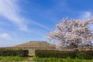 あかね古墳公園の桜 の写真素材 [FYI04307853]