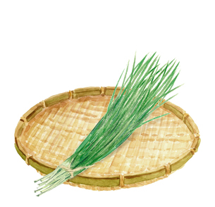水彩 ザルにのせたニラ 葉物野菜 食材のイラスト素材 [FYI04307859]