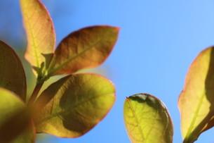 葉の写真素材 [FYI04308201]