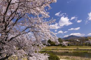 賀茂川の桜並木と比叡山の写真素材 [FYI04308218]